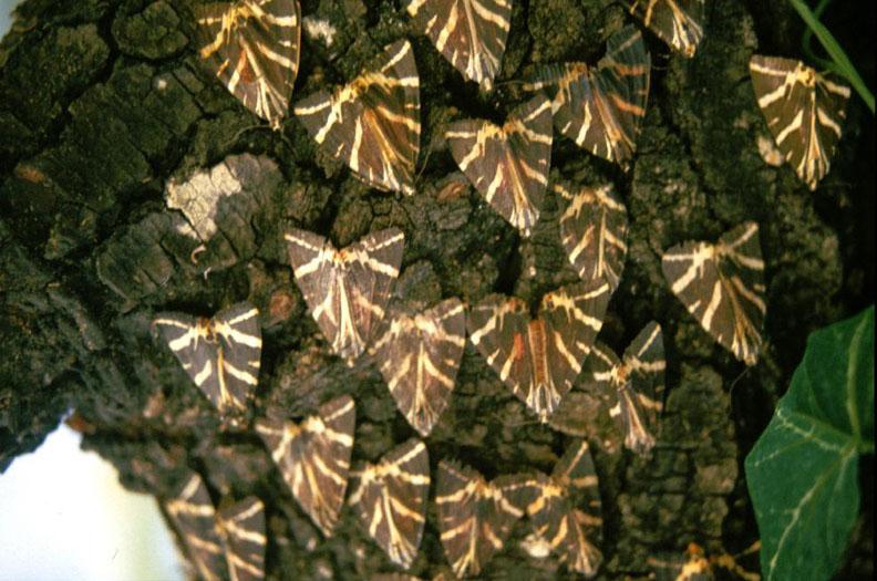 Della Valle Delle Farfalle